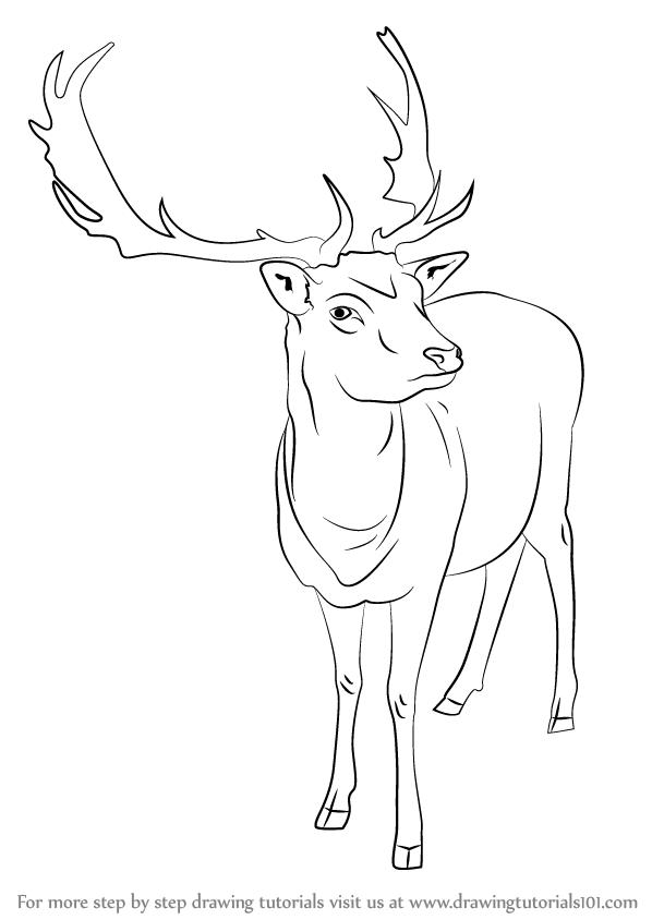 raindeer sketch how to draw a reindeer step by step pictures cool2bkids sketch raindeer