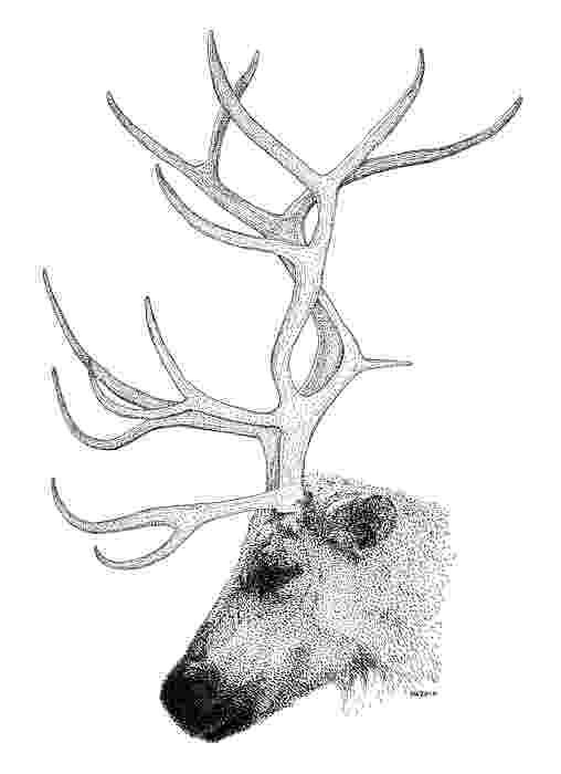 raindeer sketch how to draw chibi rudolph step by step christmas stuff raindeer sketch