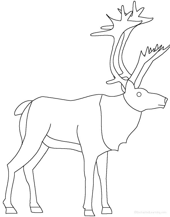 raindeer sketch how to draw rudolph the red nosed reindeer drawingforallnet sketch raindeer
