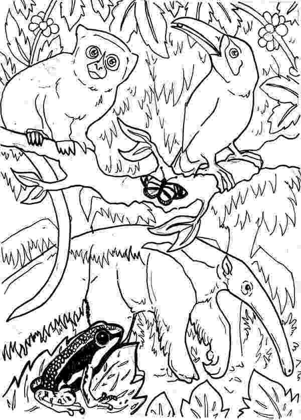 rainforest animals coloring book rainforest coloring page snake coloring pages animal book coloring animals rainforest