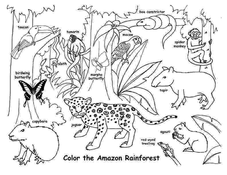 rainforest animals coloring book rainforest coloring pages to download and print for free book rainforest animals coloring