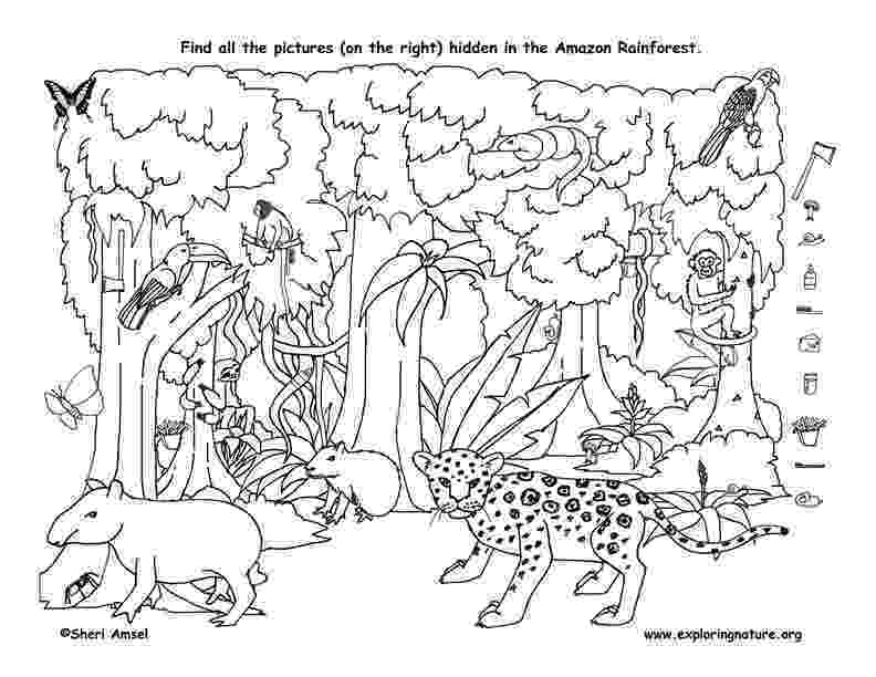 rainforest animals pictures to print shop for sonquest rainforest coloring mural by gospel pictures rainforest animals print to