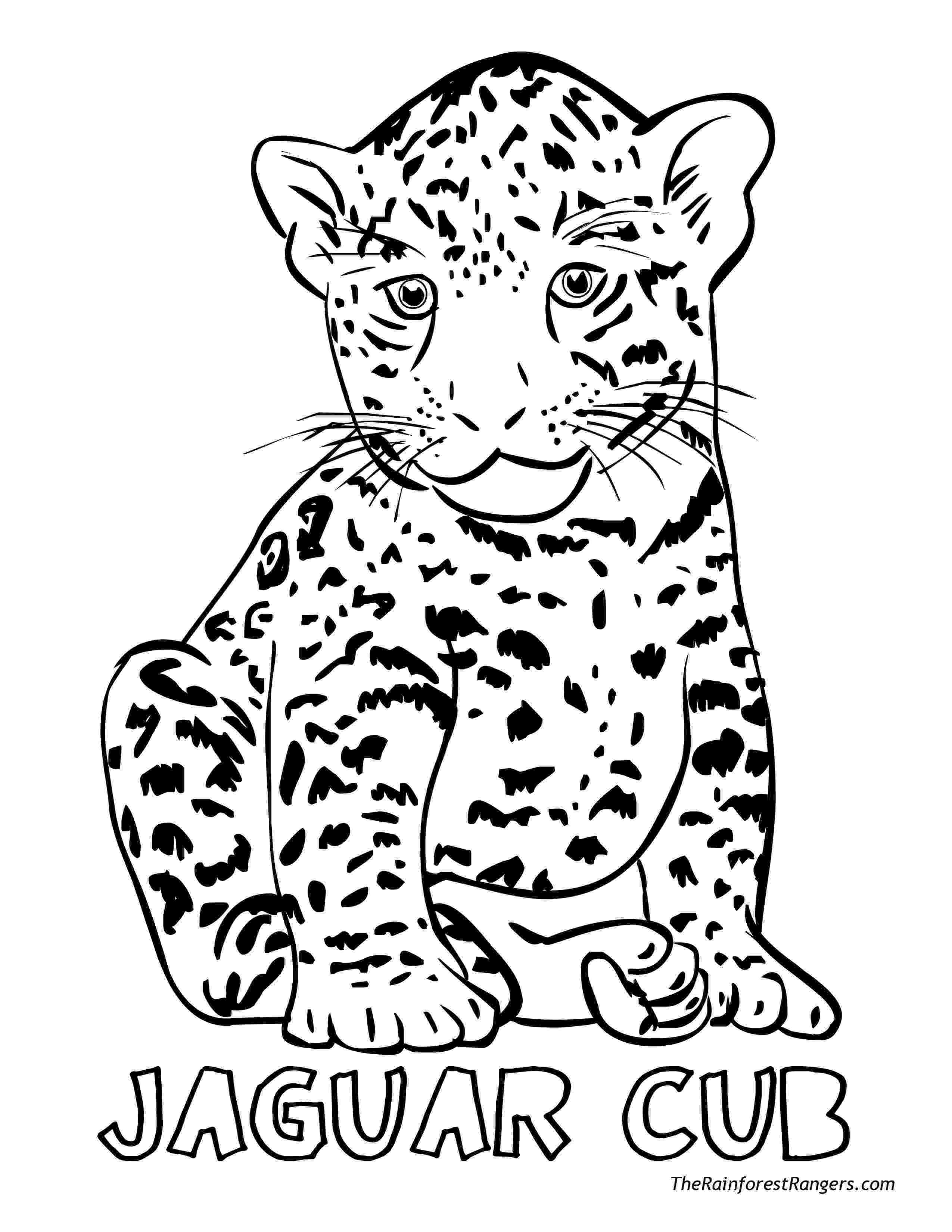 rainforest animals to color 7 best jungle animal coloring pages images on pinterest to rainforest color animals