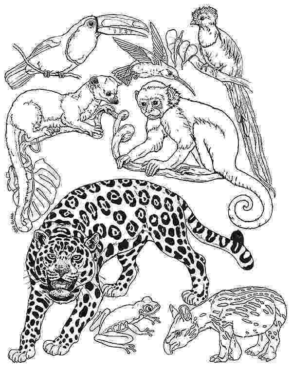 rainforest animals to color amazon rainforest diorama color to rainforest animals