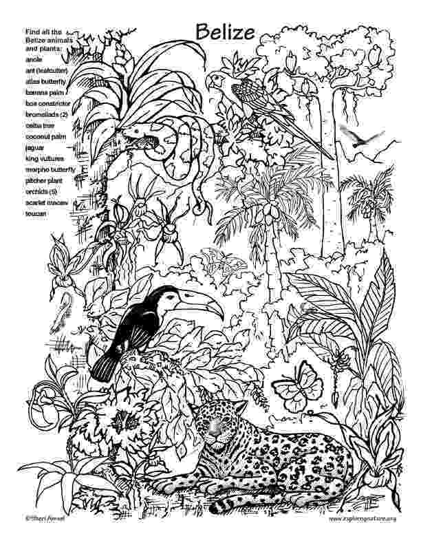 rainforest animals to color coloring pages of rainforest animals best coloring pages rainforest color animals to