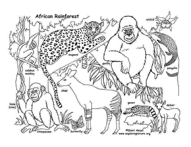 rainforest animals to color habitats of the world activity rainforest color animals to