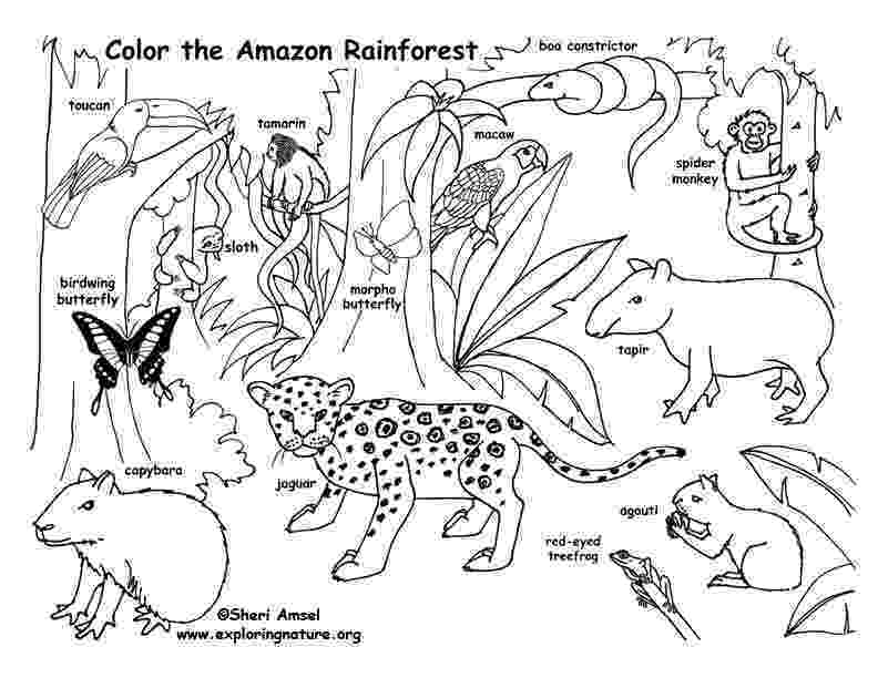rainforest animals to color rain forest coloring pages k 3 coloring sevierville tennessee color rainforest to animals