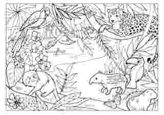 rainforest animals to color rain forest coloring pages k 3 coloring sevierville tennessee to animals rainforest color