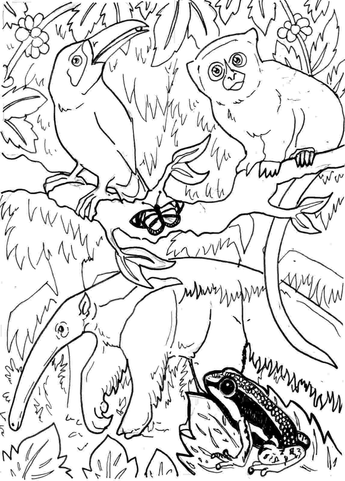 rainforest animals to color rainforest animal coloring pages getcoloringpagescom color rainforest animals to