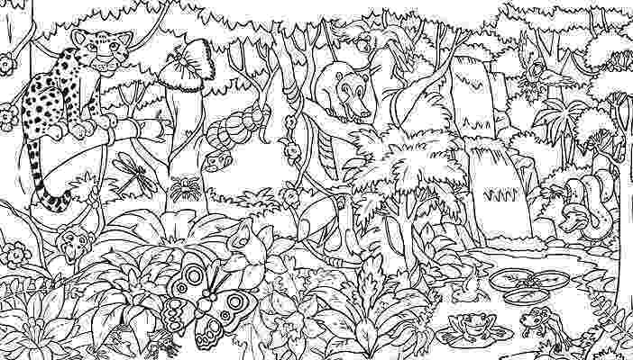 rainforest animals to color rainforest coloring pages endangered species coloring to color rainforest animals