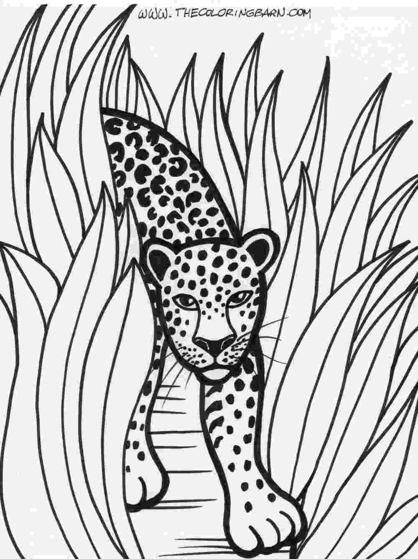 rainforest animals to color rainforest printable coloring pages the coloring barn color rainforest to animals