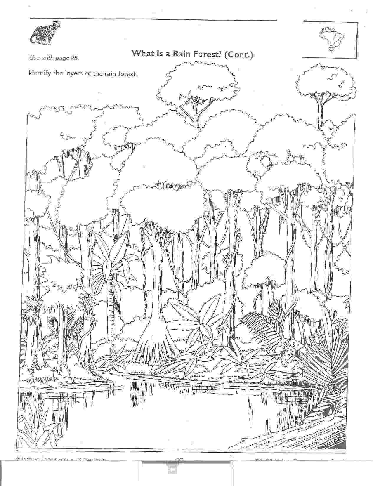 rainforest coloring pages jungle scene coloring pages coloring home rainforest coloring pages