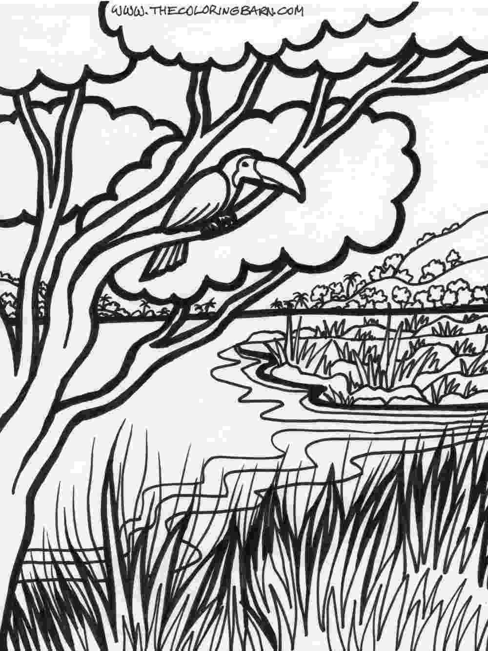 rainforest coloring pages monkey hanging on snake rainforest coloring page pages rainforest coloring