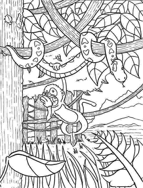 rainforest coloring pages rainforest animal coloring pages getcoloringpagescom pages coloring rainforest