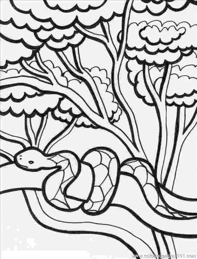 rainforest coloring pages rainforest tree drawing at getdrawings free download pages rainforest coloring