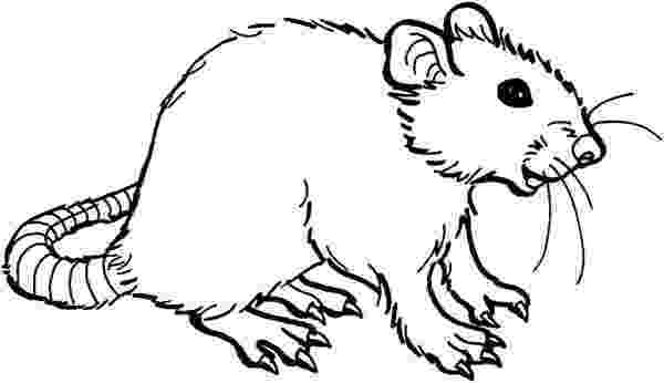 rat pictures to color free printable rat coloring pages for kids color pictures rat to