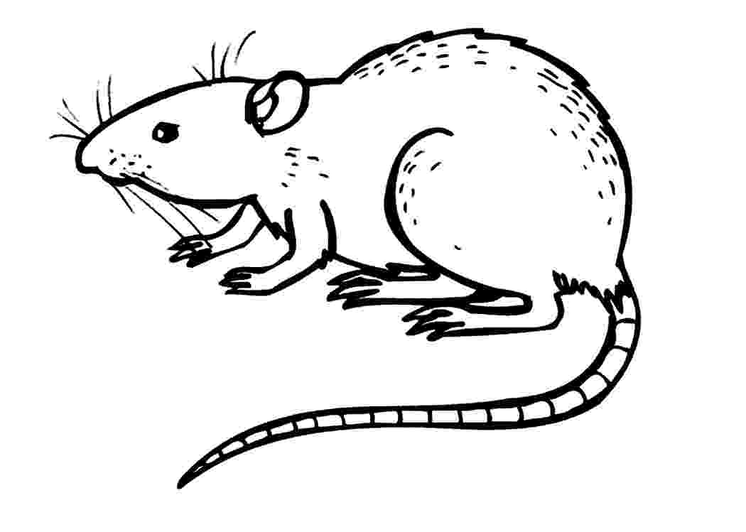 rat pictures to color free printable rat coloring pages for kids color rat pictures to