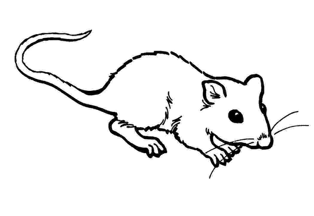 rat pictures to color free printable rat coloring pages for kids color to pictures rat