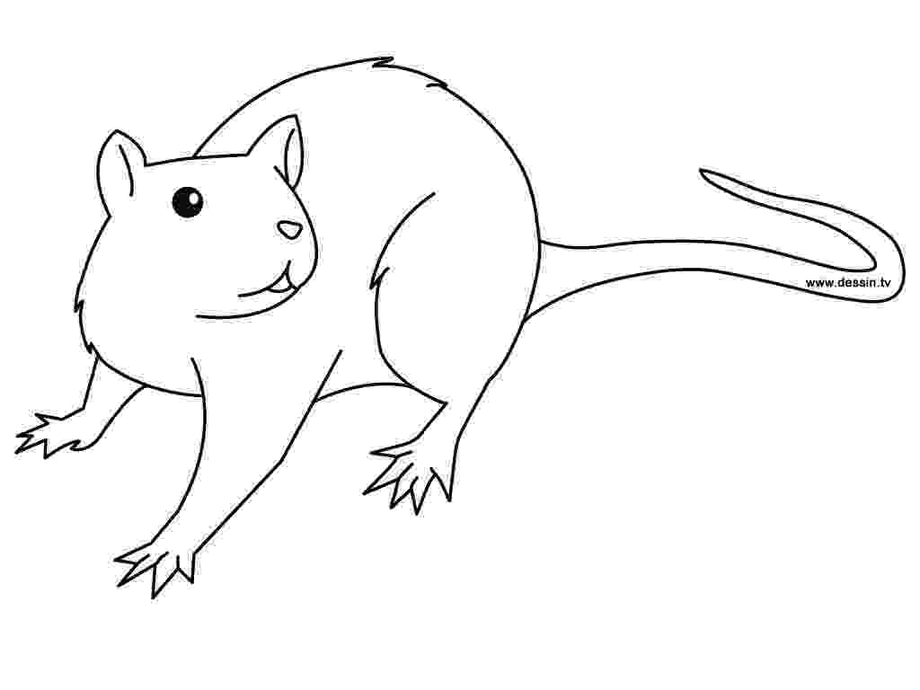 rat pictures to color free printable rat coloring pages for kids rat pictures color to