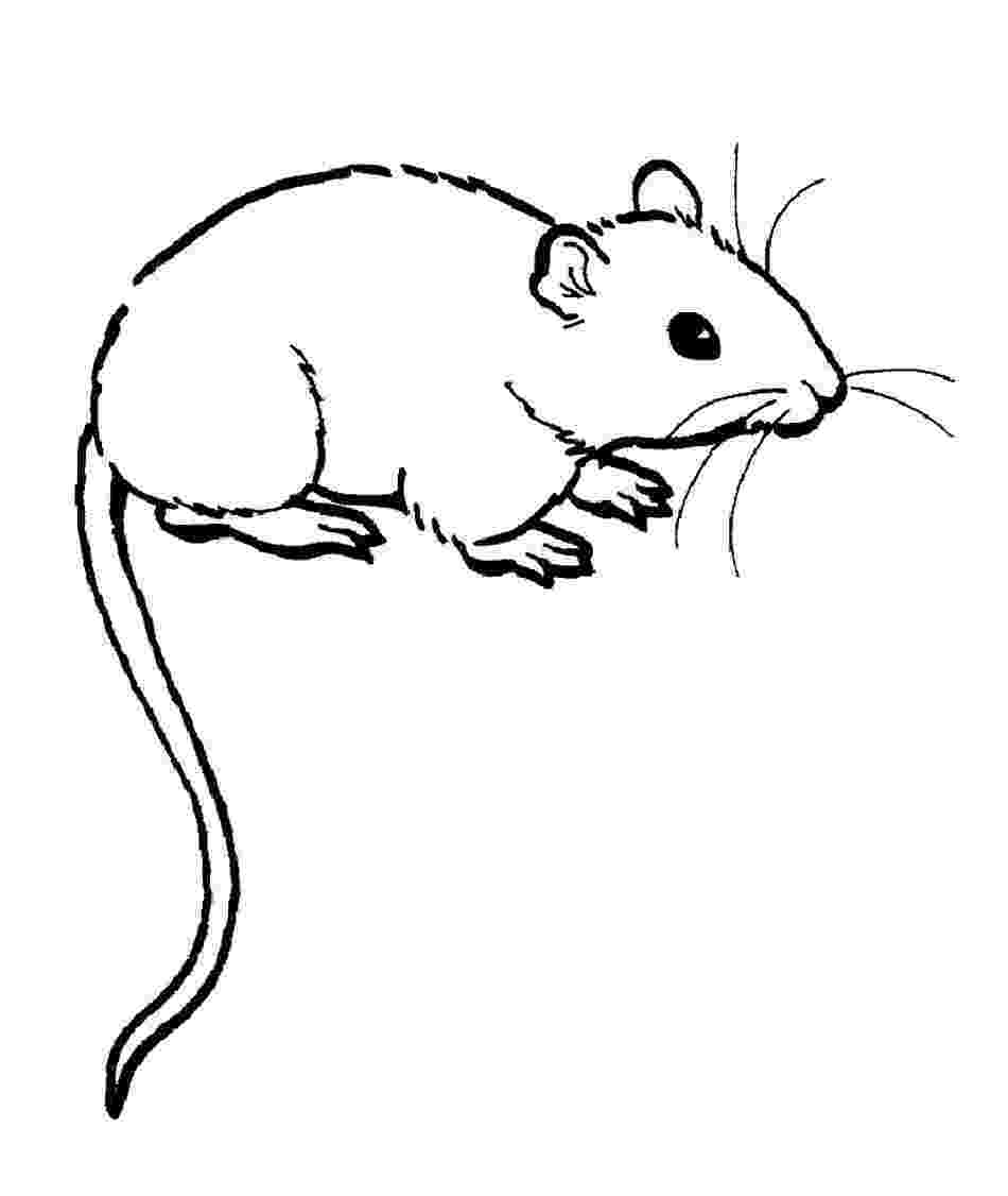 rat pictures to color free printable rat coloring pages for kids to color pictures rat