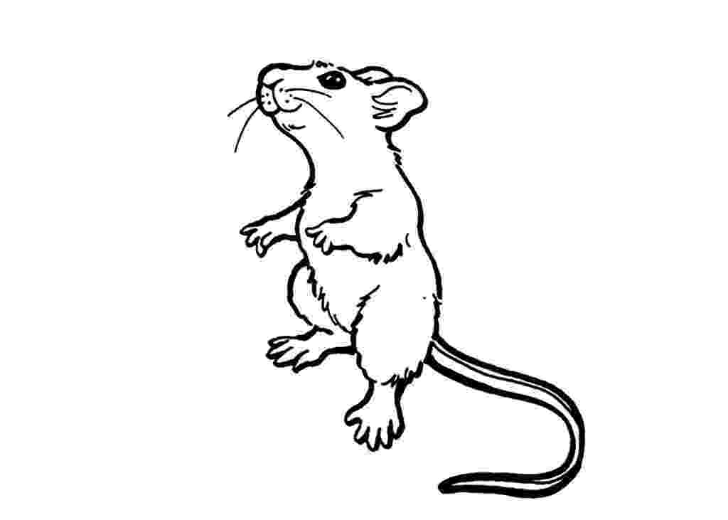 rat pictures to color rat coloring pages at getcoloringscom free printable to rat pictures color