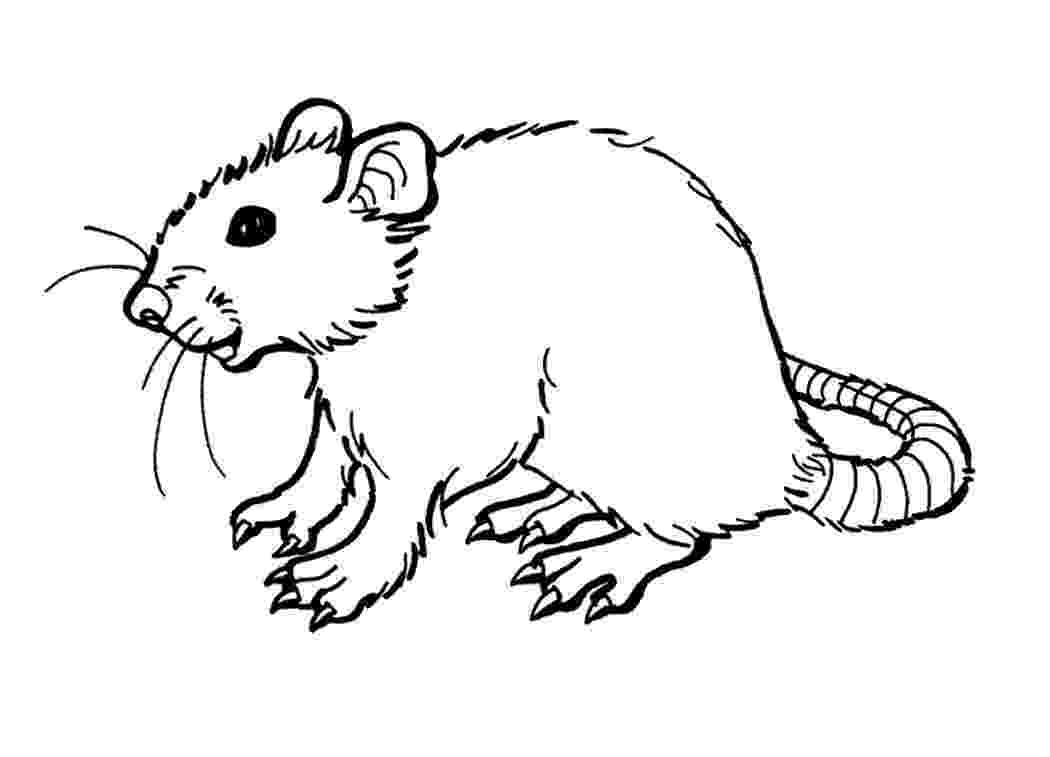 rat pictures to color rat coloring pages getcoloringpagescom rat pictures color to