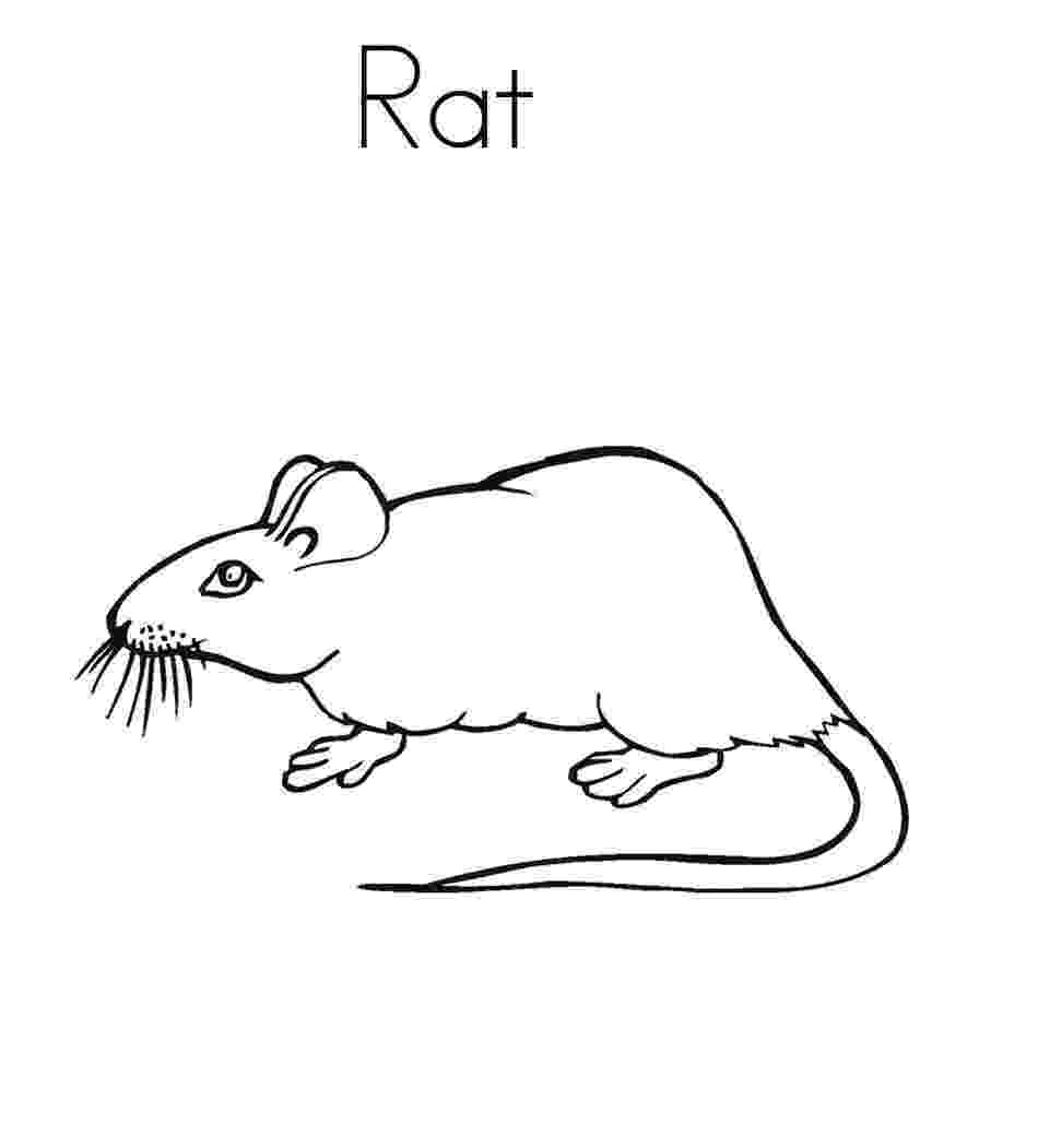 rat pictures to color rats coloring pages free coloring pages and coloring rat color pictures to