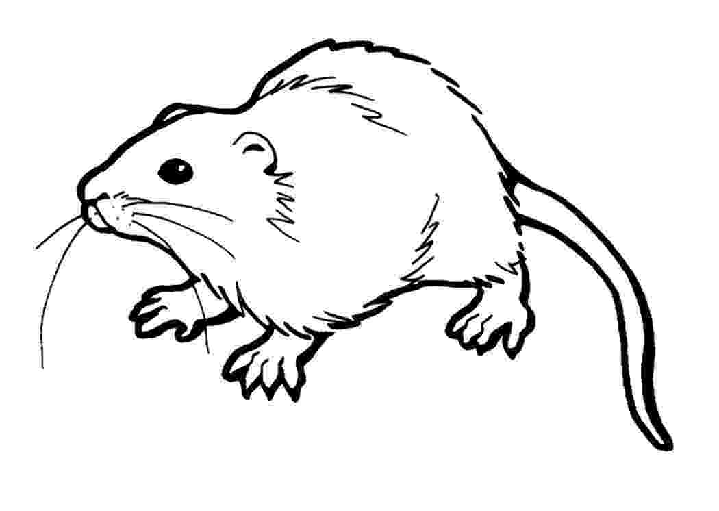 rat pictures to color underground rat coloring page coloringcrewcom rat color pictures to