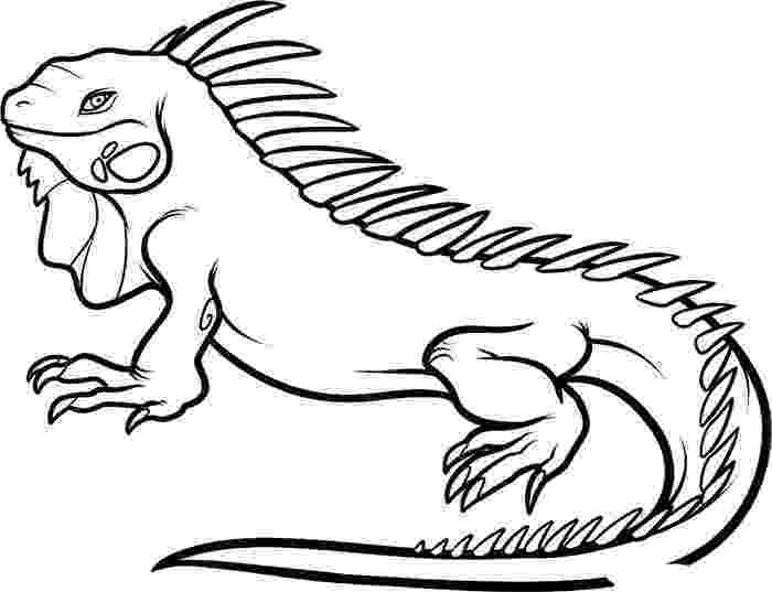 real animal coloring pages all animals coloring pages download and print for free animal real pages coloring