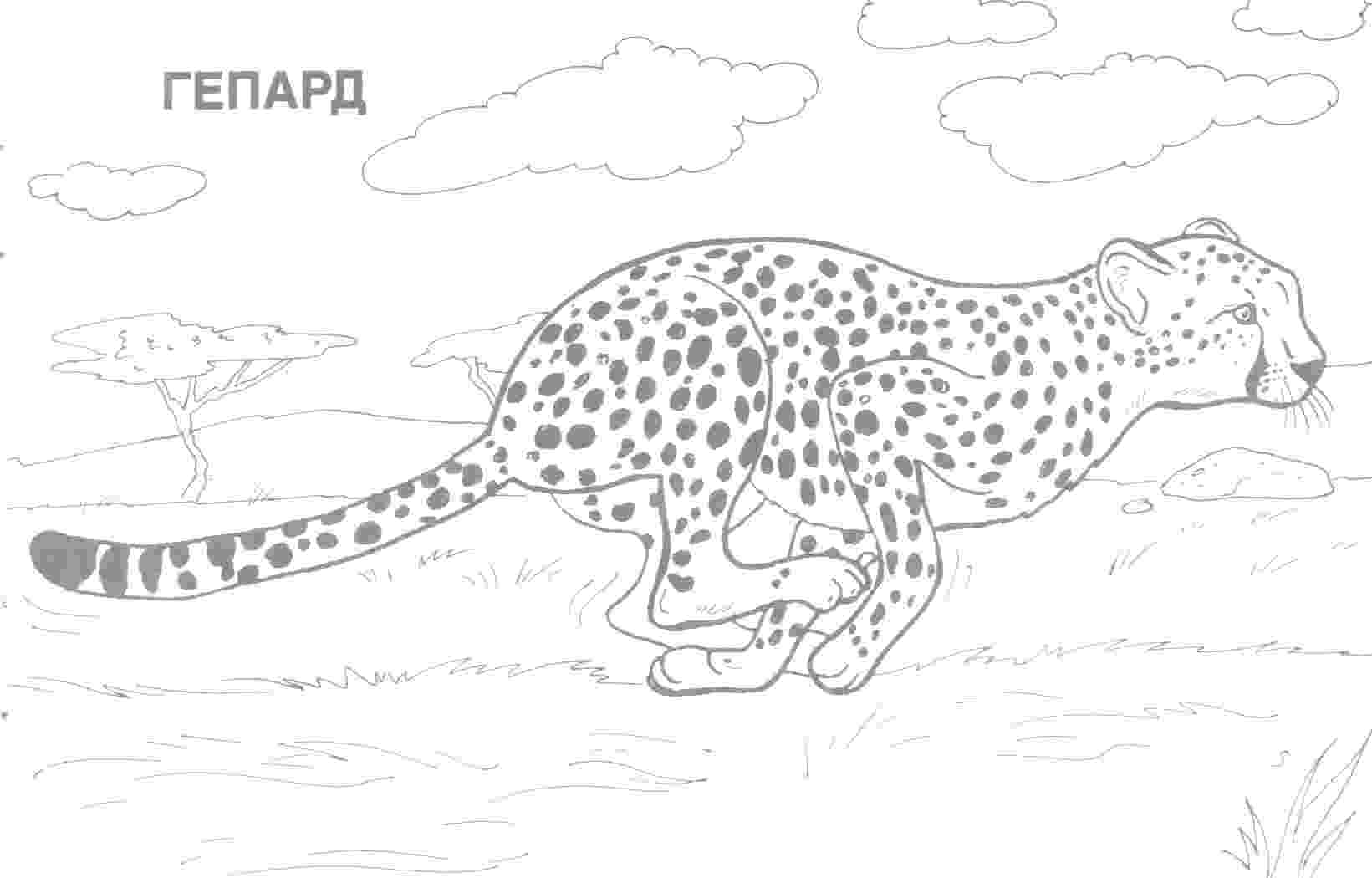 real animal coloring pages animal coloring pages from your pet to farm animals to the coloring real pages animal