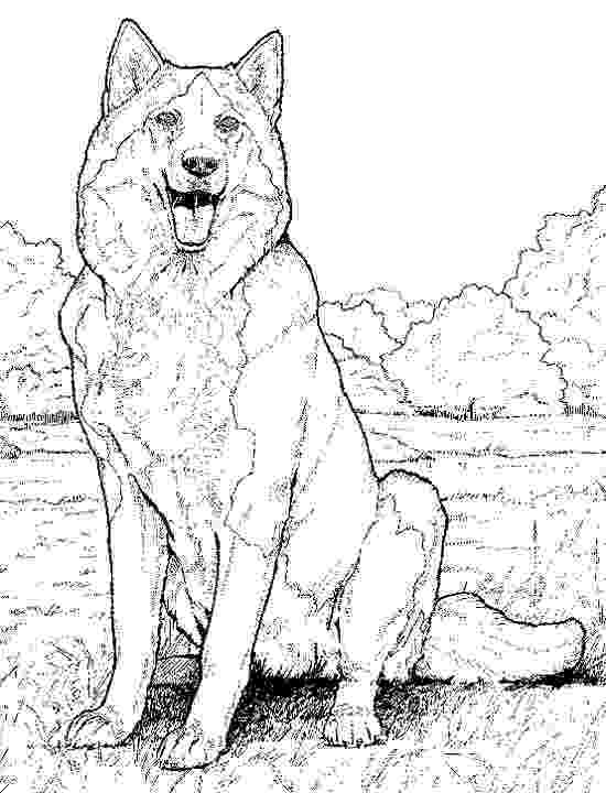 real animal coloring pages husky coloring pages free printable coloring pages for kids real animal coloring pages
