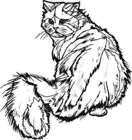 real animal coloring pages real animal coloring pages coloring pages pinterest real pages coloring animal
