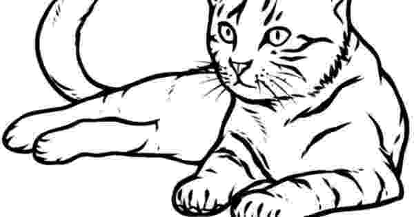 real animal coloring pages realistic cat cat animal pet drawing coloring pages coloring animal real pages