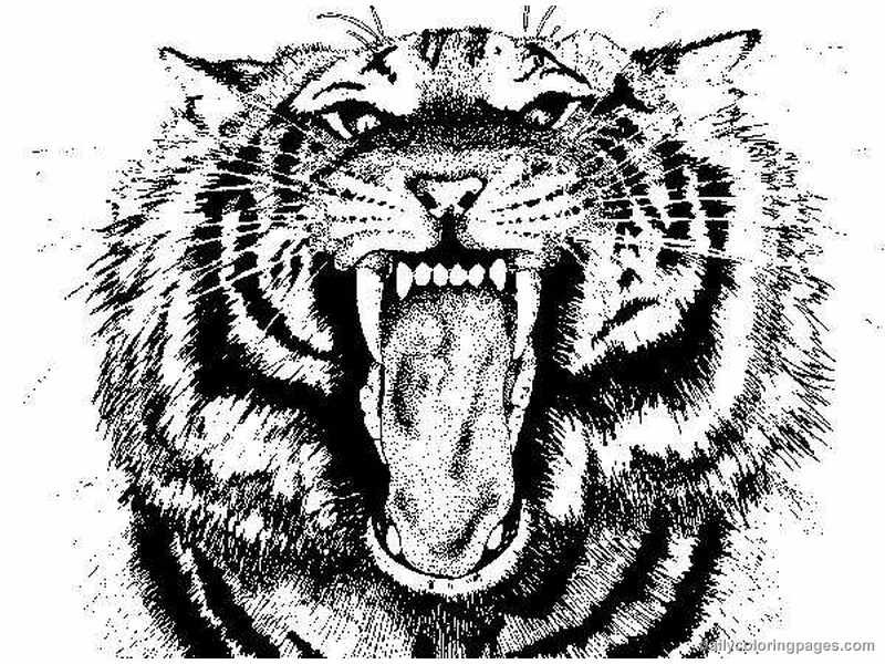 real animal coloring pages tiger coloring pages to download and print for free animal coloring real pages