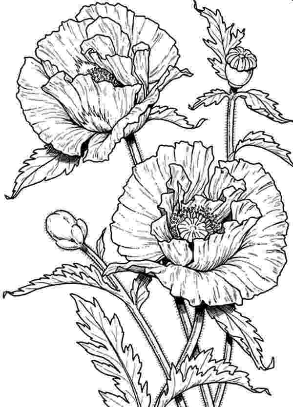realistic flower coloring pages 43 best coloring activities science images on pinterest flower pages coloring realistic
