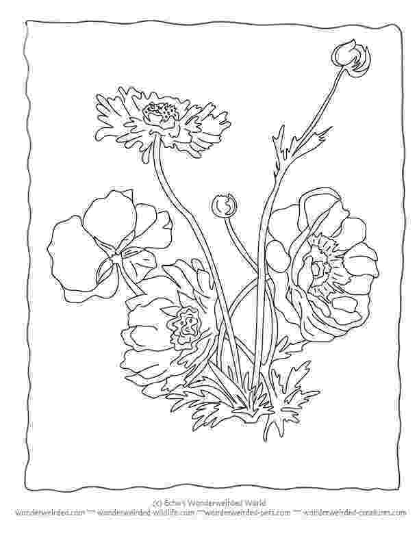 realistic flower coloring pages free vector graphic flowers wildflowers floral vase pages realistic flower coloring