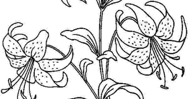 realistic flower coloring pages poppy coloring pages poppy coloring page beautiful realistic flower coloring pages