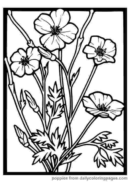 realistic flower coloring pages realistic flowers coloring pages coloring realistic pages flower 1 1