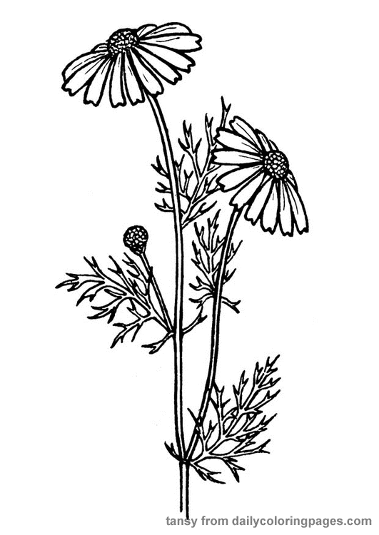 realistic flower coloring pages realistic flowers coloring pages flower realistic coloring pages