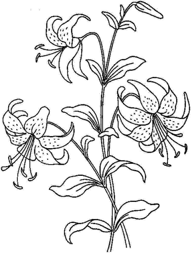 realistic flower coloring pages realistic flowers coloring pages print flower coloring coloring flower realistic pages