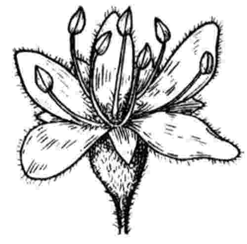 realistic flower coloring pages spring flowers coloring pages realistic coloringsnet realistic coloring flower pages