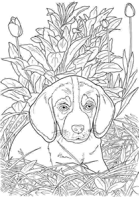 realistic puppy coloring pages 30 free printable cute dog coloring pages pages puppy coloring realistic