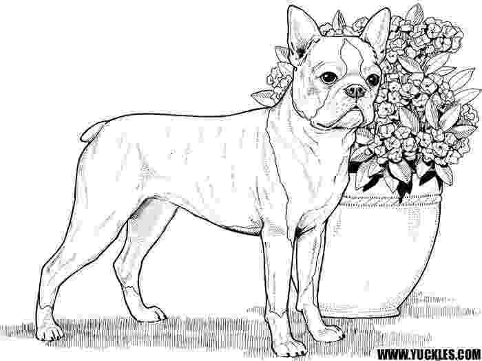 realistic puppy coloring pages 77 best images about dog pages to color on pinterest realistic coloring pages puppy
