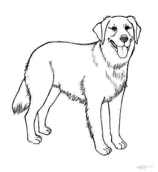 realistic puppy coloring pages realistic golden retriever coloring pages how to draw a realistic coloring pages puppy