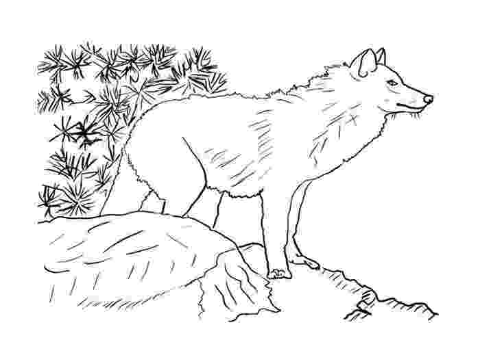 realistic wolf coloring pages animal jam drawings of arctic wolves coloringsnet pages coloring realistic wolf