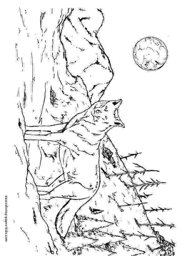realistic wolf coloring pages free printable wolf coloring pages for kids fox coloring wolf pages realistic coloring