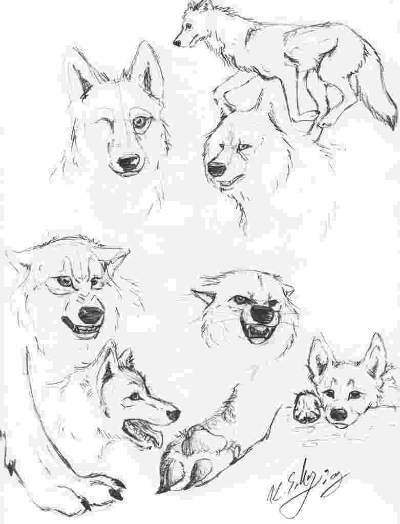 realistic wolf coloring pages print download wolf coloring pages theme coloring pages realistic wolf