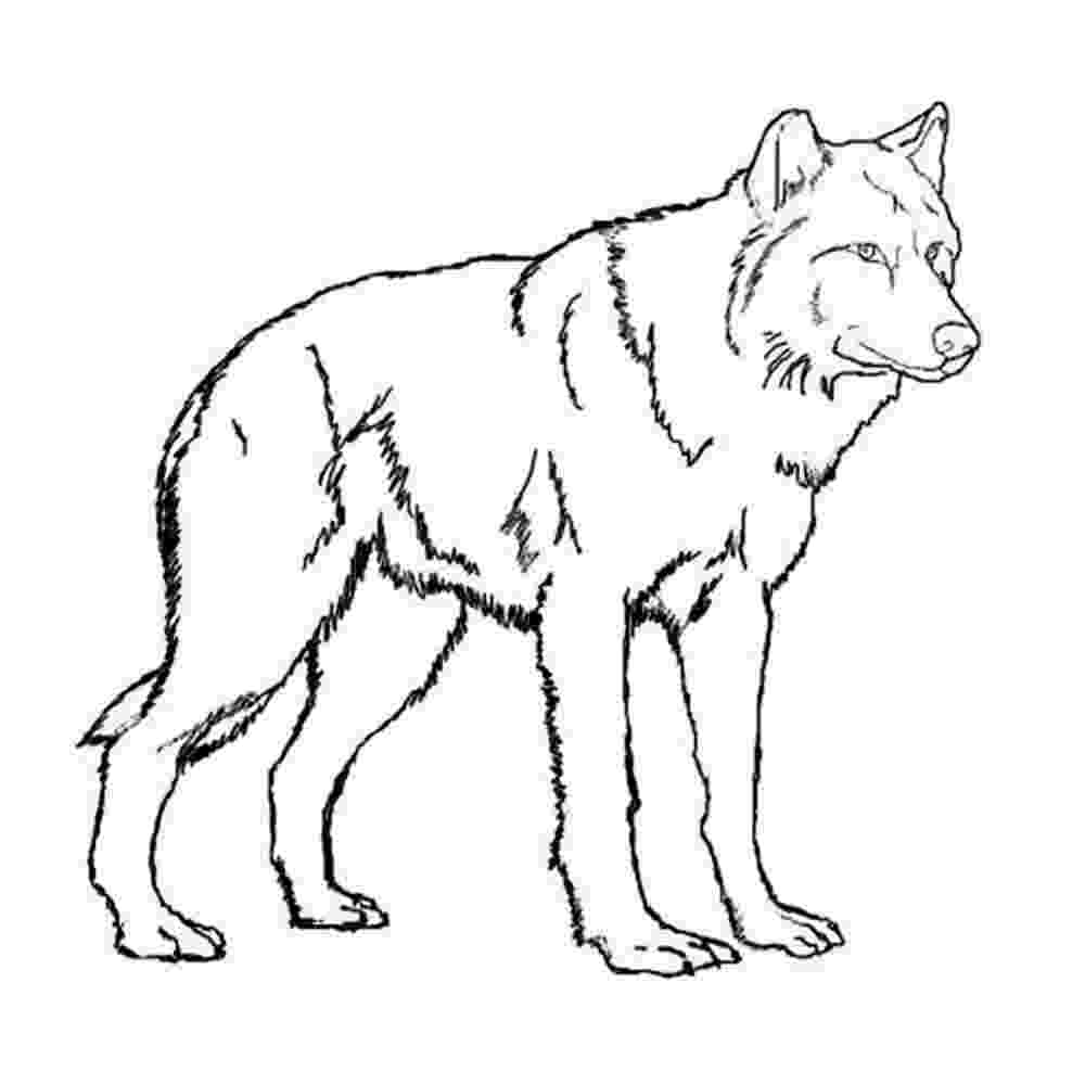 realistic wolf coloring pages realistic wolf coloring pages story stone ideas pages wolf coloring realistic