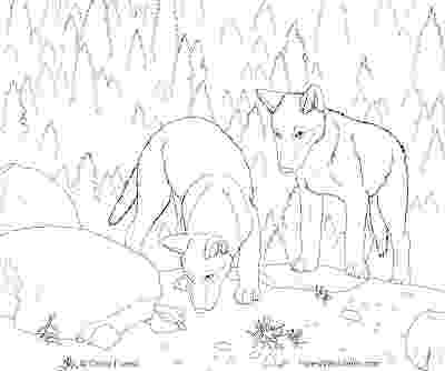 realistic wolf coloring pages realistic wolf drawing at getdrawings free download realistic coloring wolf pages