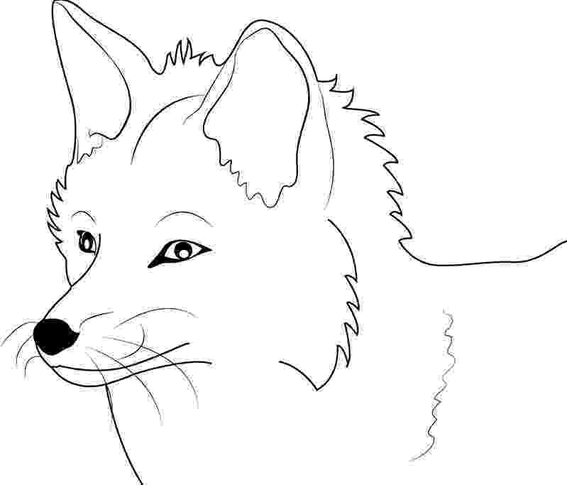 red fox coloring page fox coloring pages free printable coloring page fox red